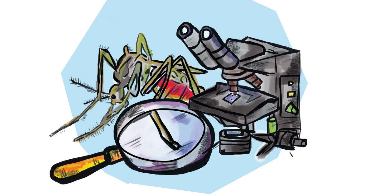 Liberan mosquitos contra el dengue en Medellín