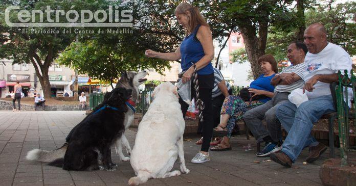 Mascotas en el Centro: así se debe evitar su pérdida