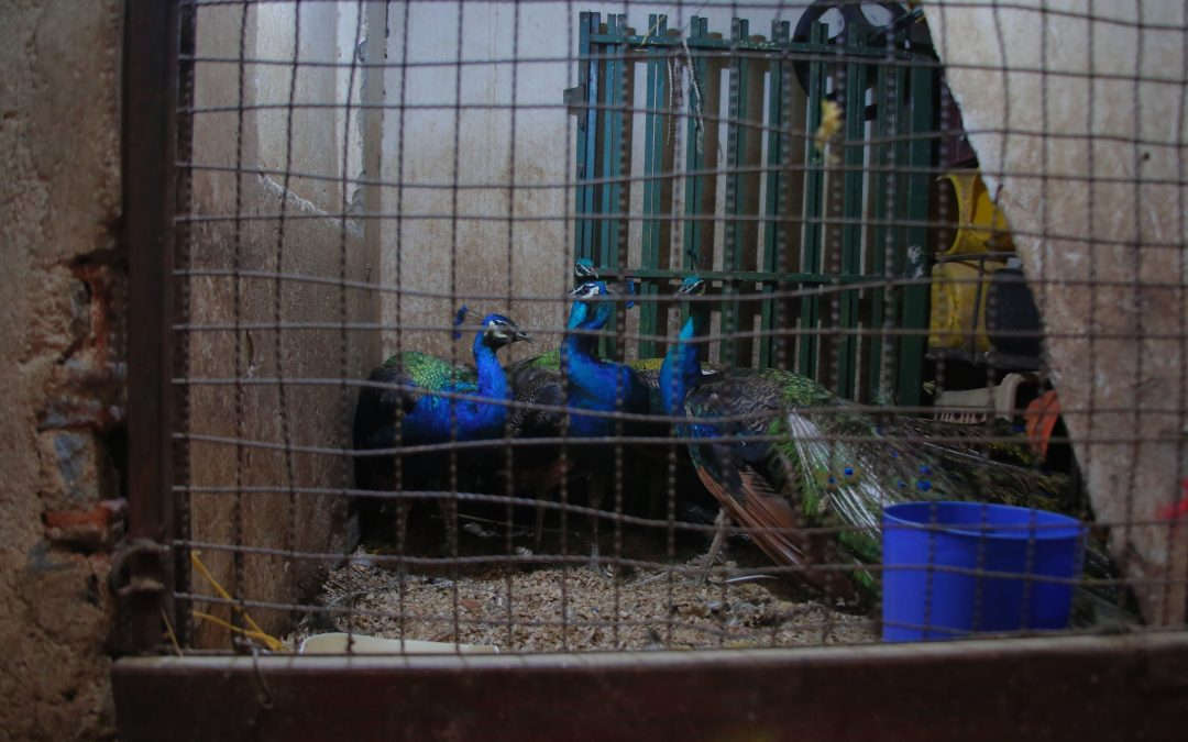 Autoridades desmantelaron sitio de sacrificio animal en la Plaza Minorista