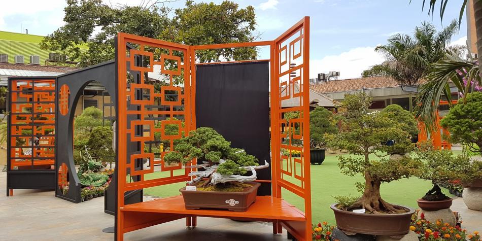 Un mundo flotante de bonsáis en Sandiego
