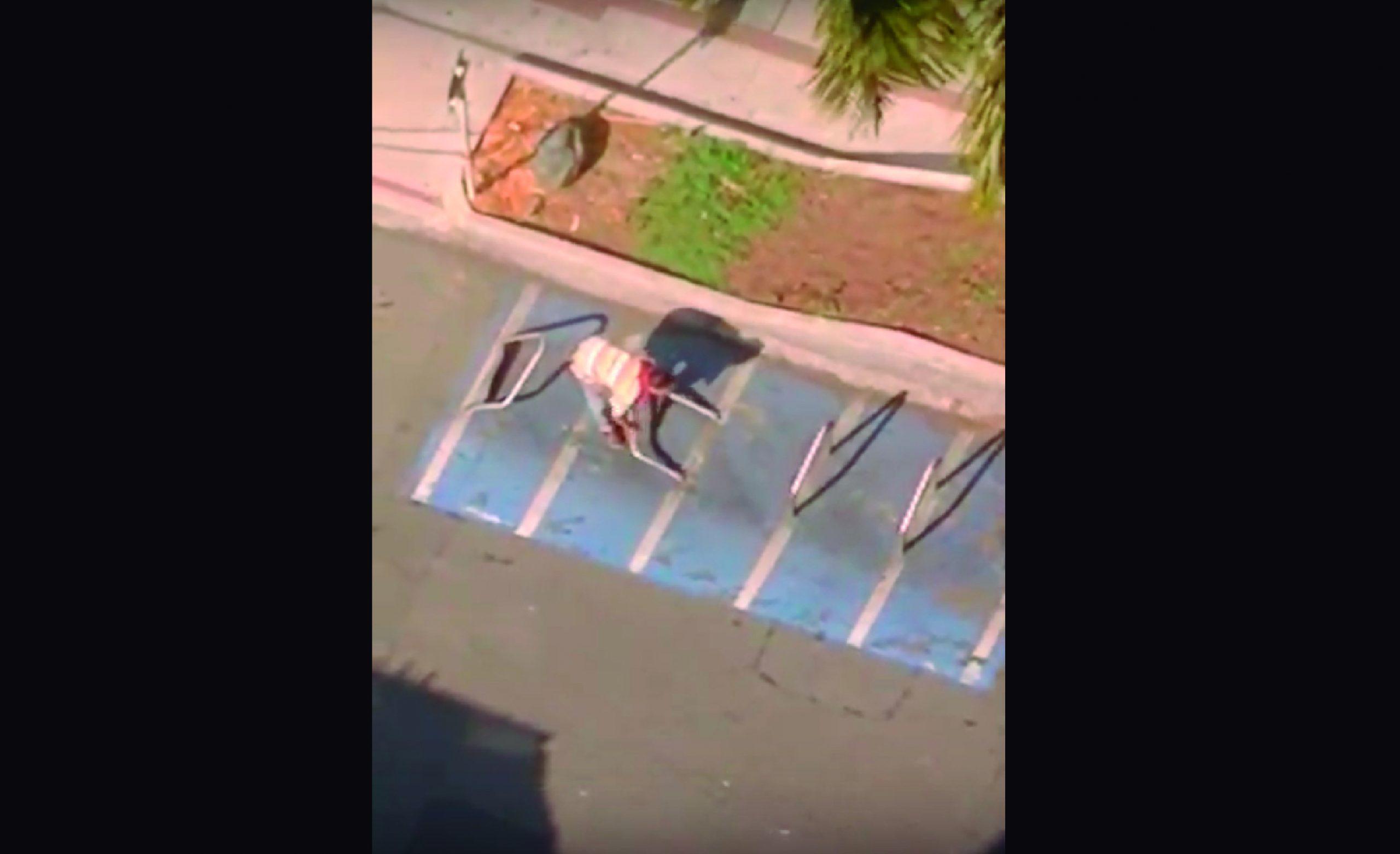 EN VIDEO | Vandalismo en parqueaderos públicos de bicicletas