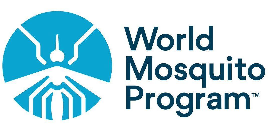 Liberan mosquitos que combaten infecciones