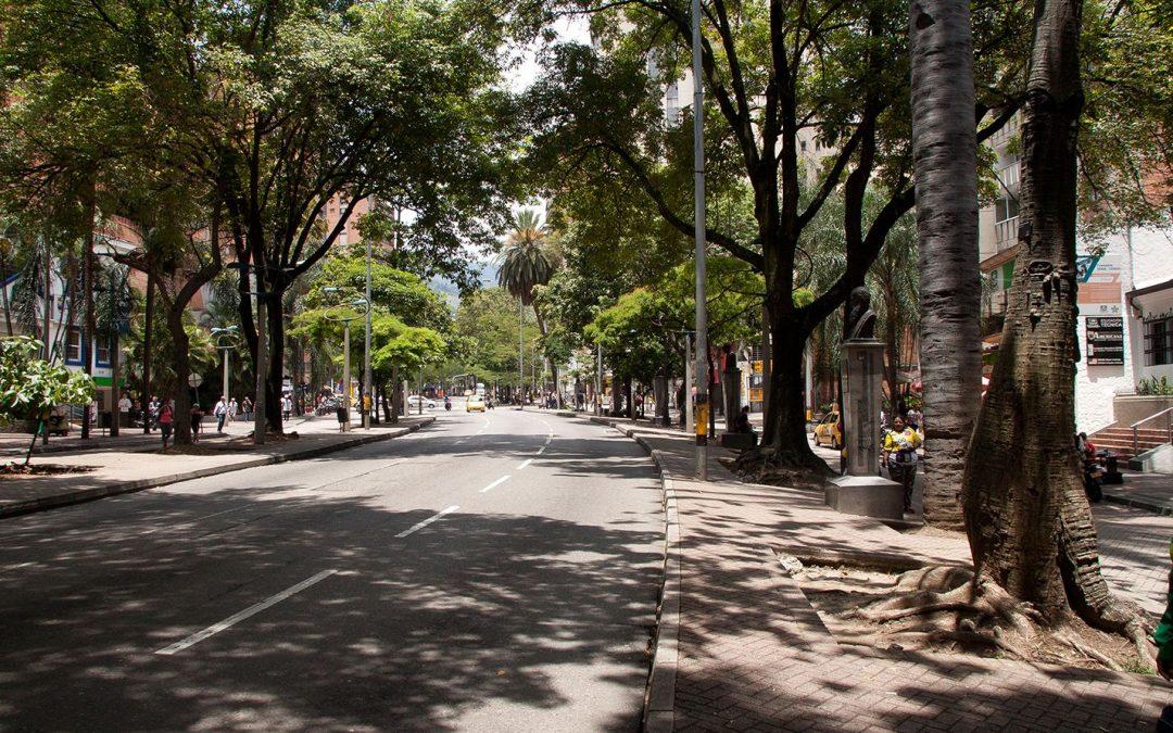 Un recuento de la historia del centro de Medellín a través de sus árboles