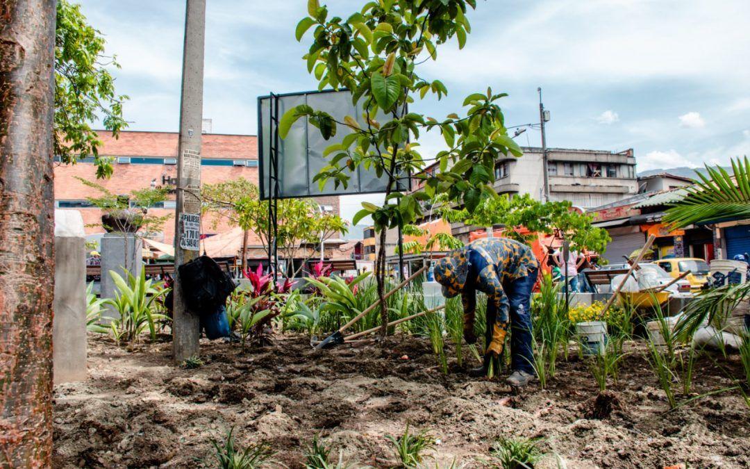 Nuevos árboles y jardines para el centro