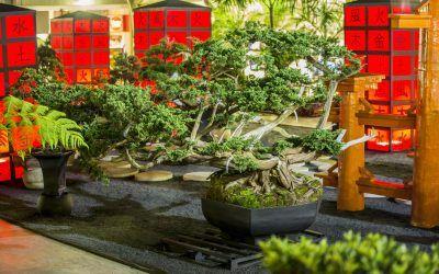 Exposición Bonsái GAMAN regresa al centro comercial Sandiego